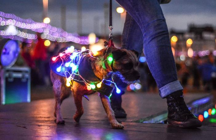 Residents and visitors light up their dogs for LumiDogs Fashion Show on Blackpool promenade