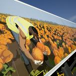 Artist Alisha Miller designs wraps for ten FreshLinc lorries